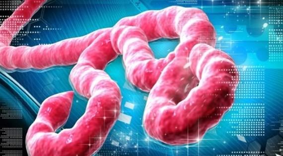 """Sağlık Bakanlığı Tarafından Yayınlanan """"Ebola Vaka Yönetim Rehberi"""" Yayınlandı"""